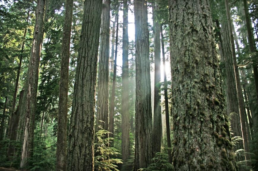 Canadian Rainforest in Pacific Rim National Park near Tofino, BC